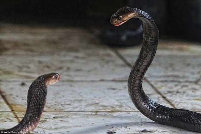 神秘屠宰場每月屠殺上萬條蛇!場面血腥,膽小慎入!