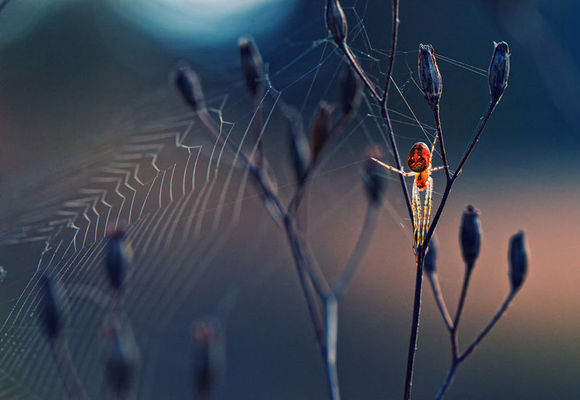 12幅極具意境的英生物學會攝影大賽作品