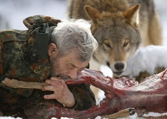 恐怖「狼人」成了雪地裏的頭領,竟用嘴餵食飢餓北極狼~!!!