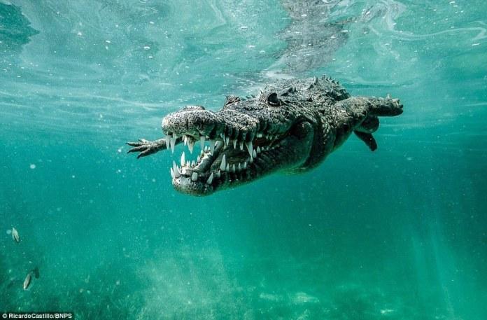沒任何防護!攝影師在水下拍到這些恐怖畫面
