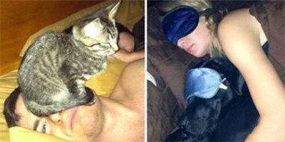 原來這就是養貓與養狗的差別,主人看完都會掉眼淚!太寫實了!