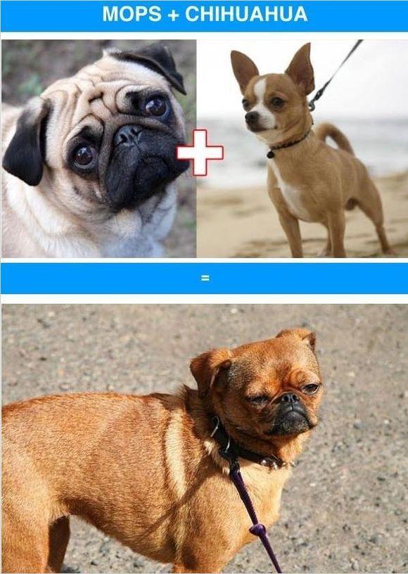 混血狗長啥樣?和混血兒差別怎麼這麼大呢!
