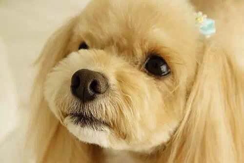 狗狗的心聲,這11種表現證明狗狗真的很愛你!