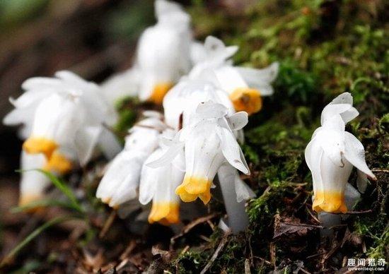 男子野外發現超漂亮之花,知道它的食物後嚇崩潰!
