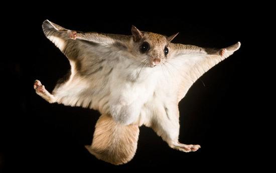 超奇異的動物可是又特別的萌,你看過幾種?
