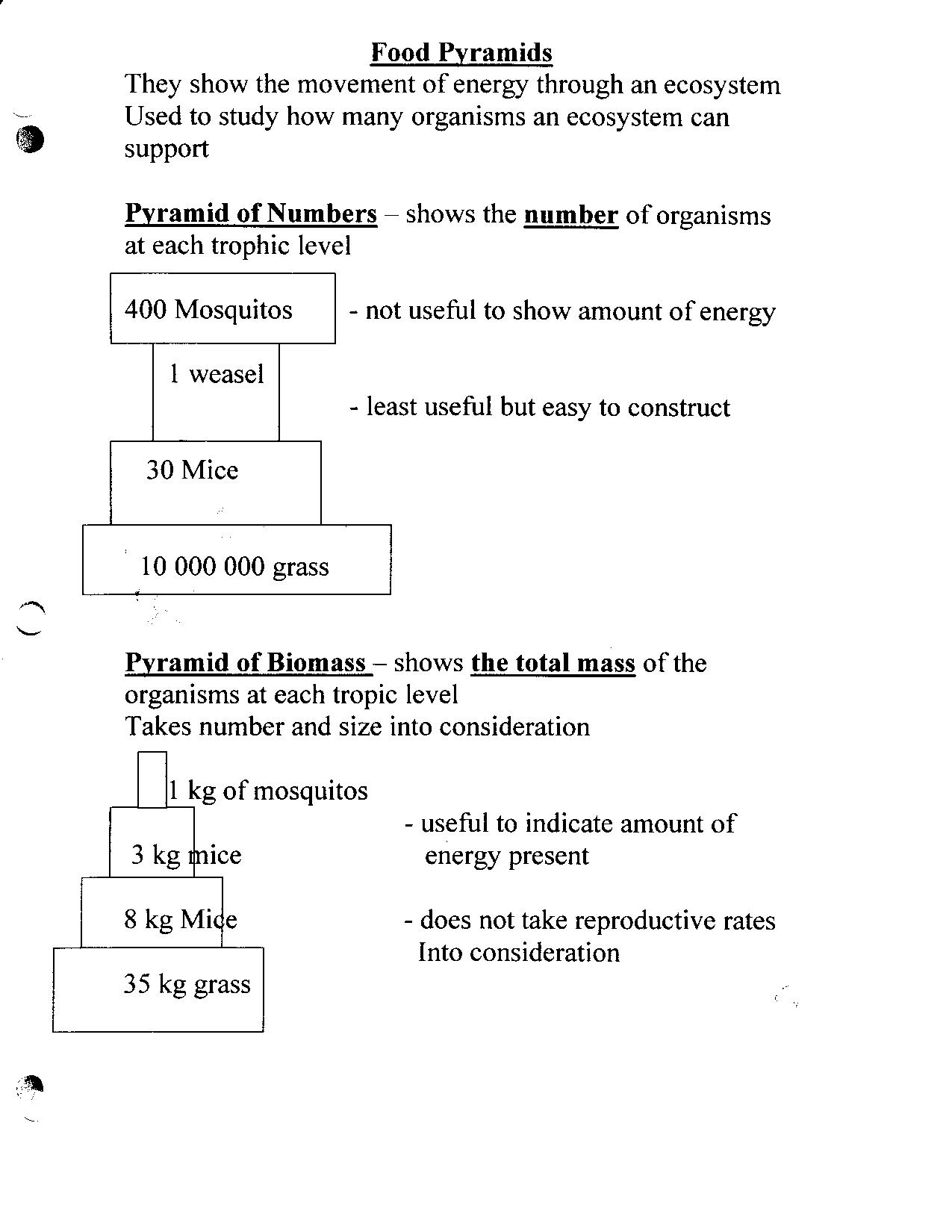 Bill Nye Gravity Worksheet