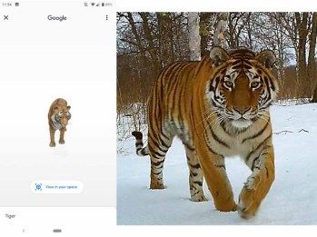 Tiger View in 3D Google - How to View Animals in 3D on Google   Tiger View in 3D Google AR
