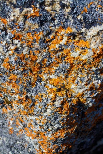 Liking lichens in the landscape  MSU Extension