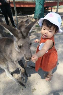 Feed the kangaroo.
