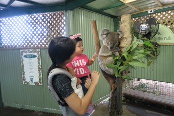 Petting the koala.