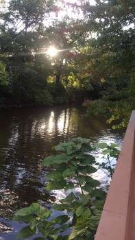 Study spots on the Red Cedar River. The sights and sounds help ease my school stresses.