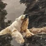 あの「White Bear Z USDJPY」が無料で使えるなんて!