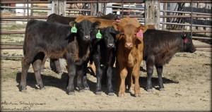 Montana Rancher Feature Q&A: Scott Wiley of Musselshell