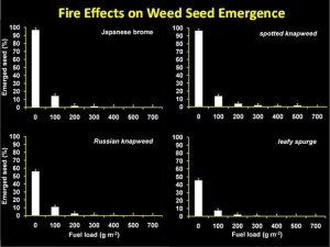 Fire Effects on Weed Seed Emergence