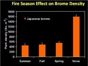 Fire Season Effect on Brome Density
