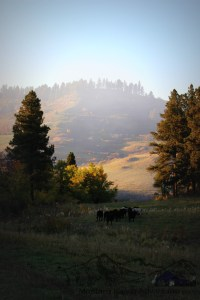 A great scene captured by Justine Kougl on the ranch in the Wolf Mountains south of Busby.