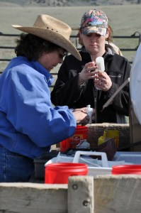 Bev Fryer Ranching Woman of the Year Vaccinations