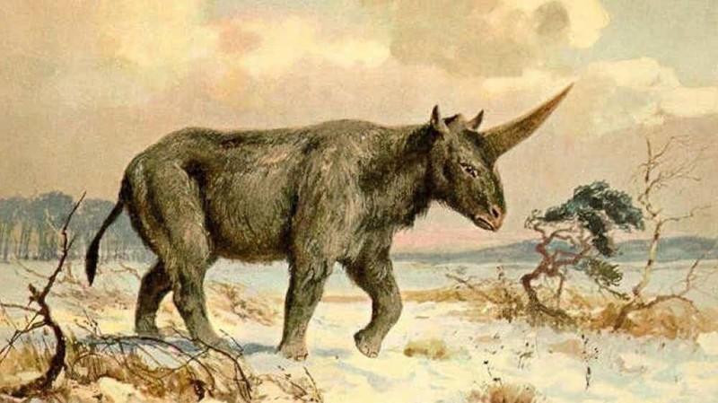 2. В Сибири жили единороги сибирь, факт