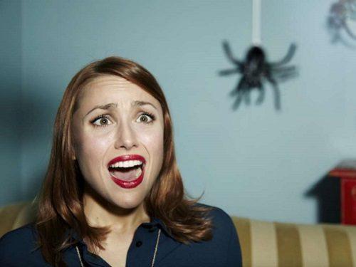 Приметы про пауков. Увидеть в доме, на улице, на работе или в квартире: к чему это?