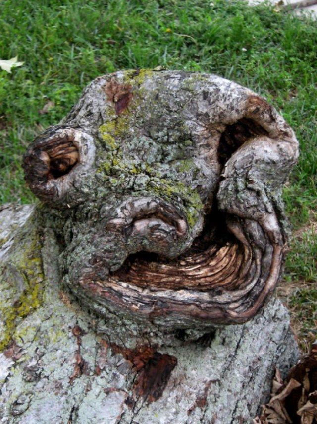 25. Curve grinning tree, arbres, tromperie, pareidolia, il semble que oui pas pareil, on dirait que ça ressemble à un visage