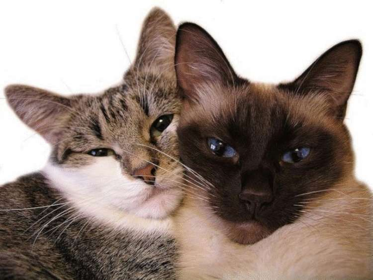 Опять не выспался, бедняга? 7 способов отучить кошку будить тебя ночью! :)