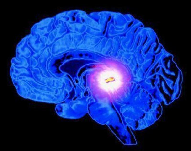 В нашем мозгу есть выключатель открытия, тело, человек