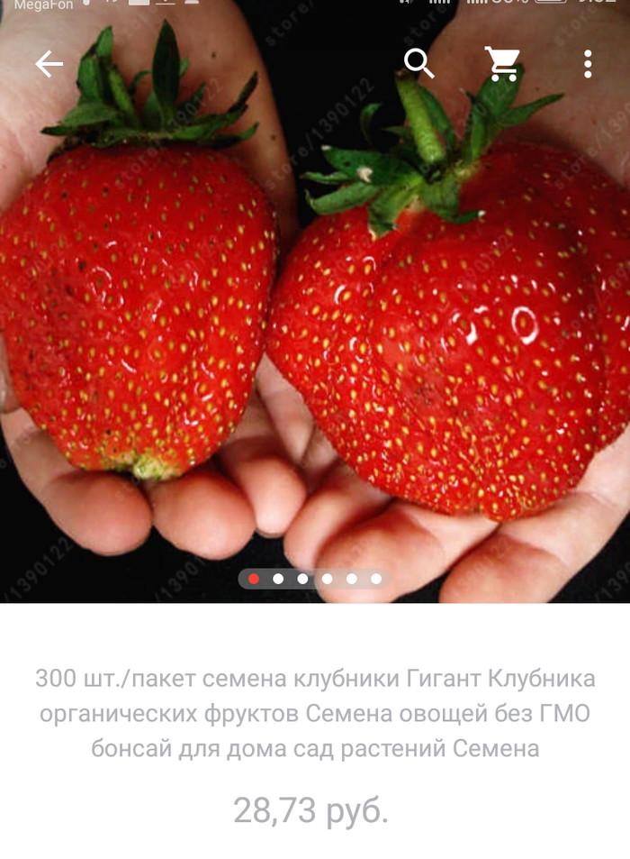 Гигантская клубника на подоконнике. свежие ягоды, на подоконнике, урожай, Отзывы на алиэкспресс, длиннопост