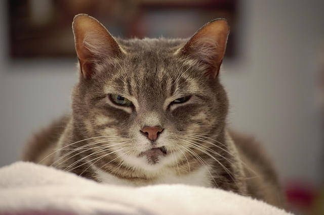 Кошка не любит, когда вы смотрите ей в глаза