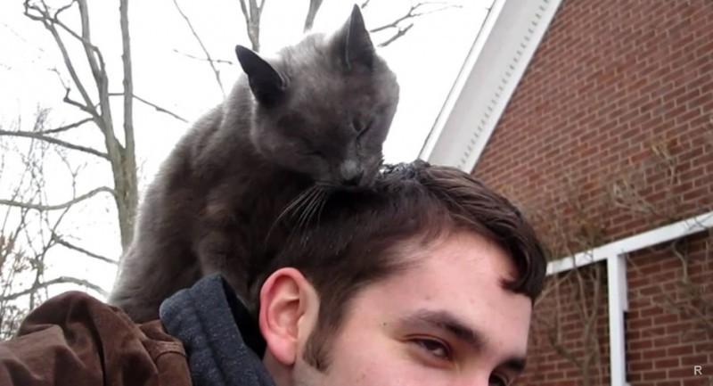 Кошка лижет хозяина
