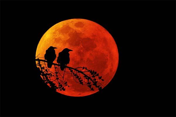 Кровавая Луна и птицы