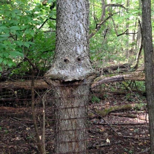 9. Un arbre qui aime manger un arbre, des arbres, une tromperie, une pareidolie, on dirait que ce n'est pas la même chose, on dirait que ça ressemble à un visage