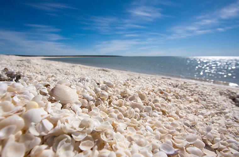 Пляж - фото самых красивых и необычных пляжей в мире. Ракушечный пляж