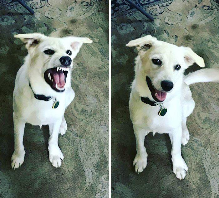 Доказательства того, что доброе слово приятно только собаке, а кошкам — всё равно