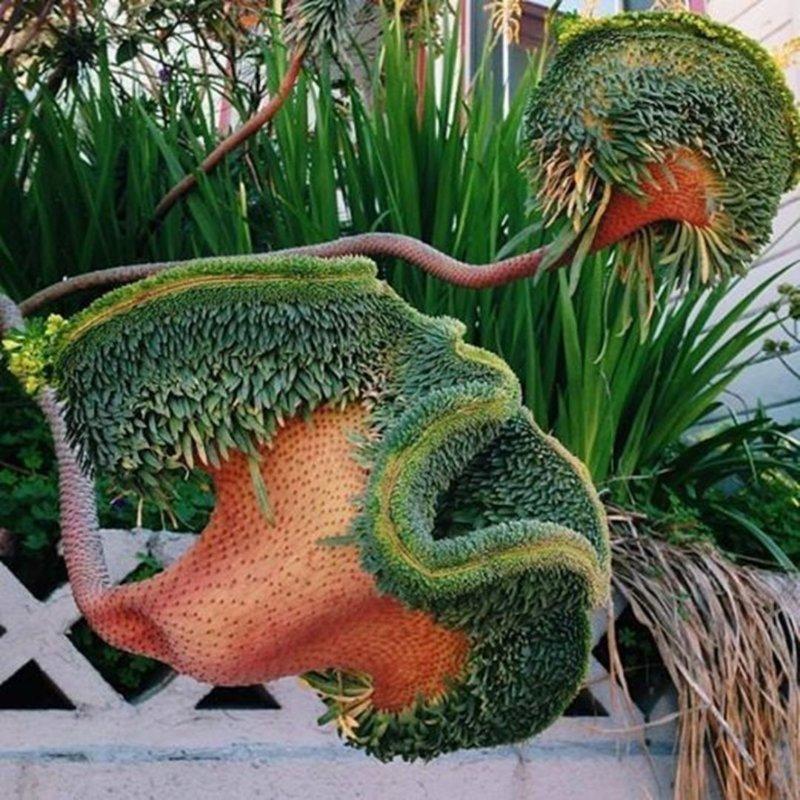 Синяк Вильдпрета — травянистое двулетнее растение рода Синяк семейства Бурачниковые волосатость, интересное, красота, природа, растения, флора