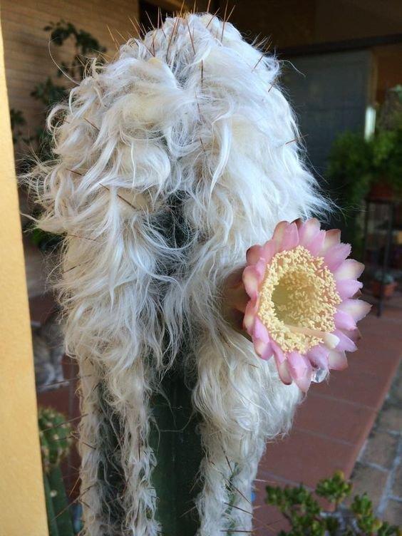 """""""Волосатые"""" растения волосатость, интересное, красота, природа, растения, флора"""