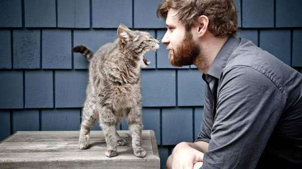 Почему кошки лучше относятся к женщинам, чем к мужчинам