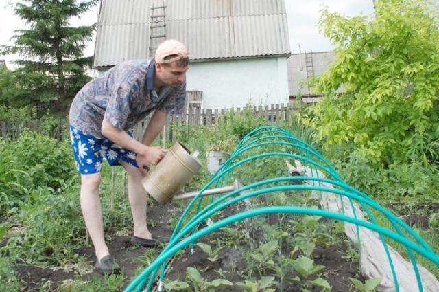 Что надо успеть сделать в июле на даче? Советы опытного садовода
