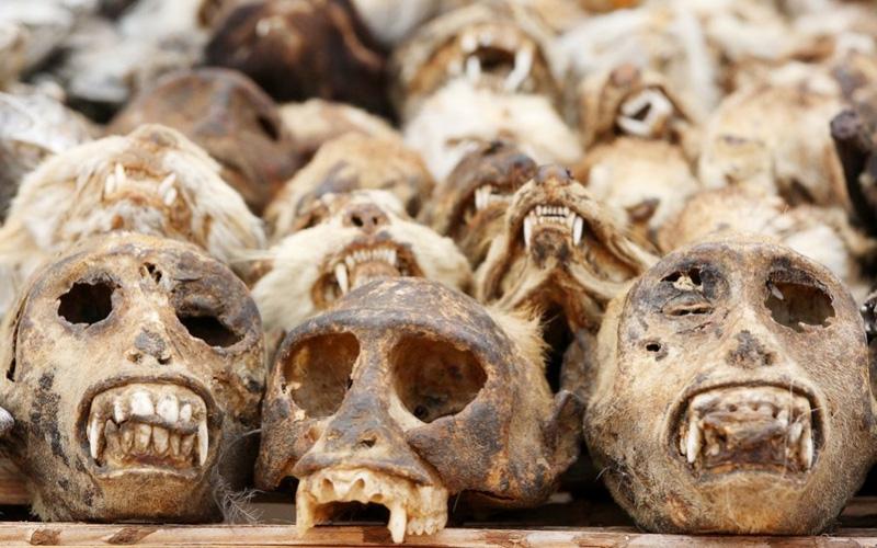 Культ Вуду: Воскрешение мертвеца, которого не было
