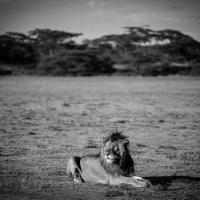 TANZANIA - Serengeti continued