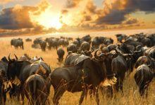Photo of Mtembezi Guide to the Great Migration in Maasai Mara