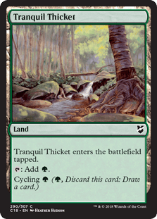 tranquil-thicket