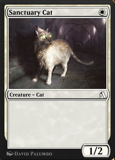 anb-17-sanctuary-cat