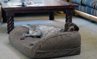 Orvis Memory Foam Bolster Dog Bed Review - Mountain Weekly ...