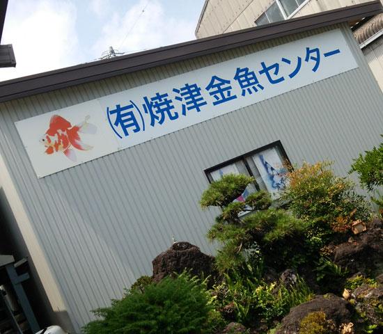 焼津金魚センター