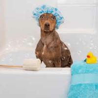 Dog Photography Store Thumbnail