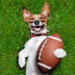 Puppy Bowl 2018 Thumbnail