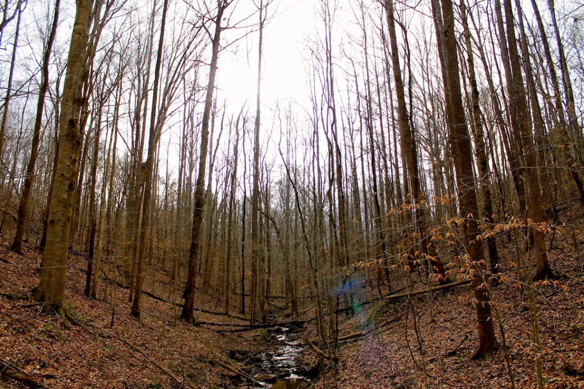 Hiking trail in Tennessee. (MTSU Sidelines/ Olivia Ladd)