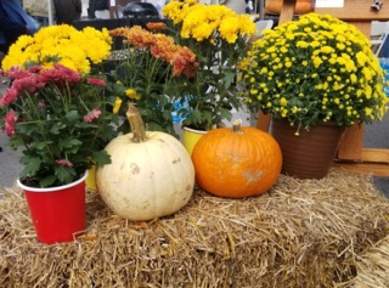 Fall-time decor is displayed at PumpkinFest in Franklin, Tenn. on Oct. 28, 2017. (Gerardo Palacios / MTSU Sidelines)