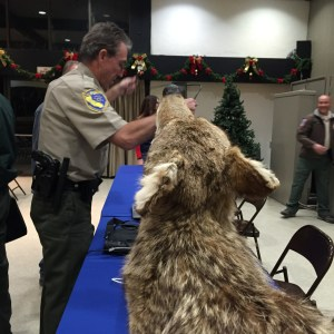 Stuffed coyote at ASNC wildlife presentation