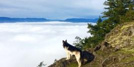 Summit - Above the fog!